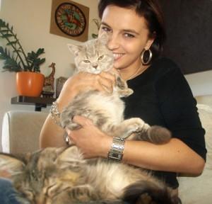 hodowla kotów brytyjskich, hodowla kotów norweskich leśnych, hodowla kotów rosyjskich niebieskich